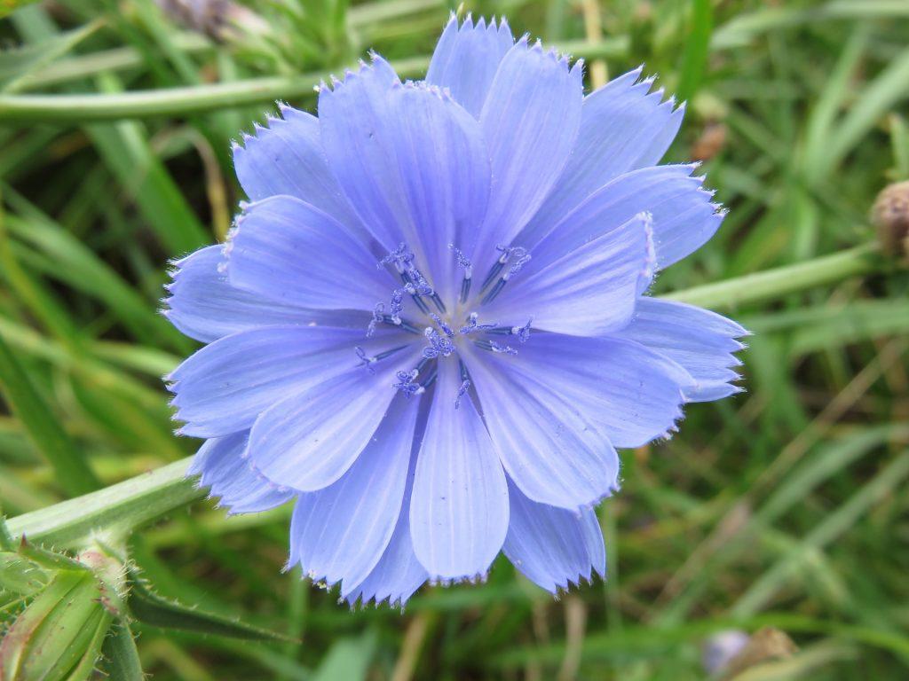 wildflower-1158323_1920